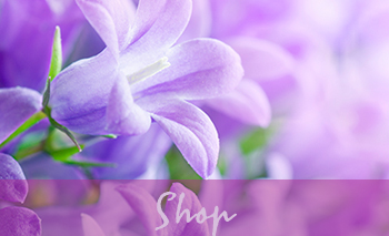 Select our purple flower shop image to navigate to our online store for our 21 day cleanse and purification program and more.